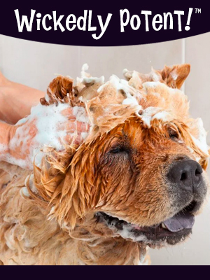 PawFlex | Wickedly Potent, Natural Remedies, Itchy Mutt Dog Shampoo